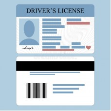 MALE driver-s-license  ( front and back )